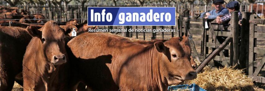 (Español) Negocio ganadero: ¿Cómo se financia el sector?