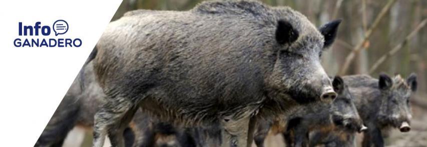 (Español) Confirmaron un nuevo caso de triquinosis en La Pampa