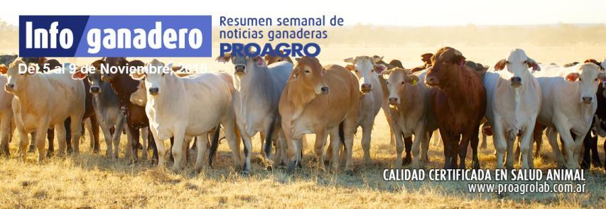 Se recuperó la venta de carne al mercado interno y China ya se lleva 6 de cada 10 kilos exportados