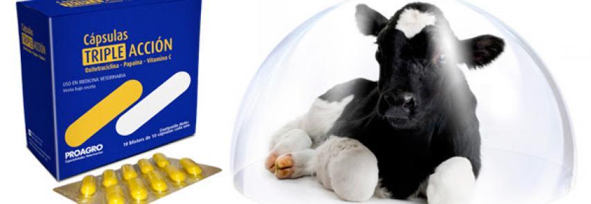 ¿Sabía Ud. que las Cápsulas Triple Acción de Proagro ayudan a prevenir la muerte prematura de terneros?