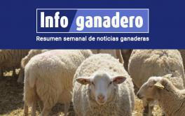 (Español) La cadena ovina, con desafíos muy claros para afrontar