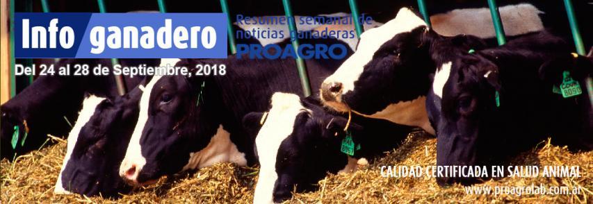 Carne argentina al mundo: las exportaciones crecieron 72% en volumen y 55% en valor