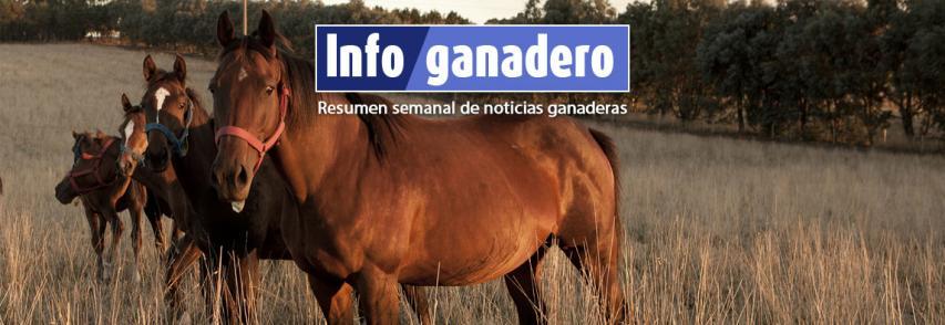 (Español) Nuevos requisitos para el bienestar animal en al ámbito pecuario y deportivo