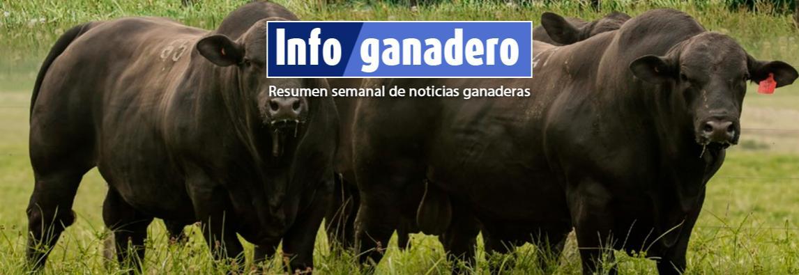 (Español) Controlar la sanidad en toros para evitar pérdidas