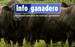 Controlar la sanidad en toros para evitar pérdidas