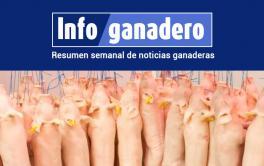 (Español) Exportar cerdo a China: una gran oportunidad que puede chocar con un cuello de botella